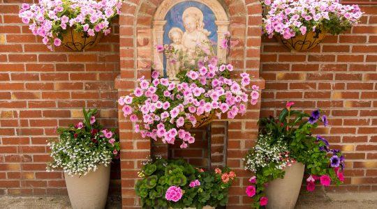 Parish Garden - summer 2021
